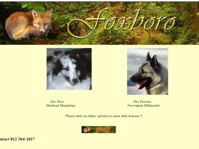 Foxboro Norwegian Elkhounds