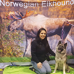 elkhound picture taking